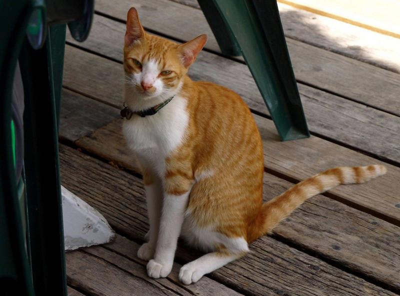 Fido's kitty.