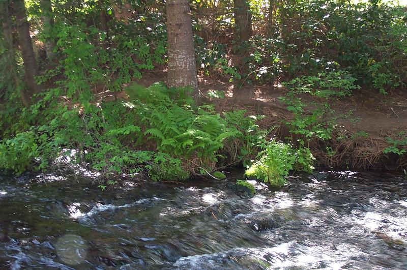 spPaulina-Springs-water-and-f.jpg