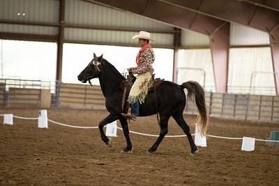 Horse 27