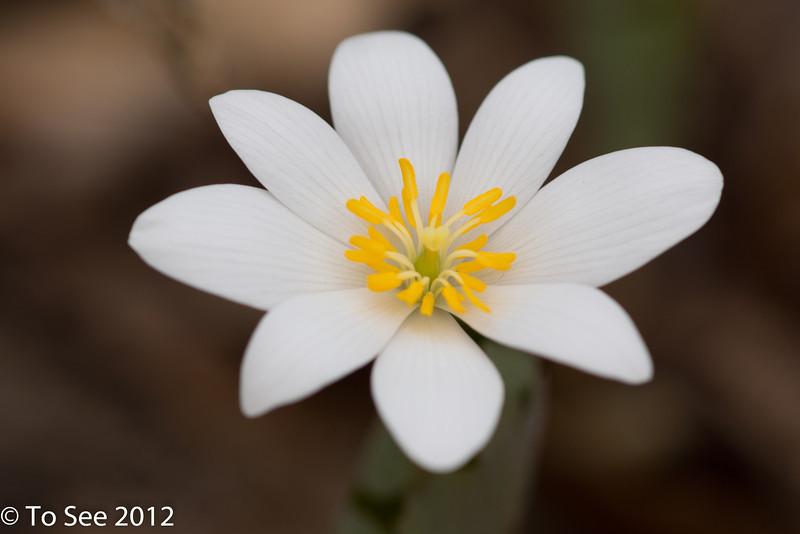 Fleurs 2012