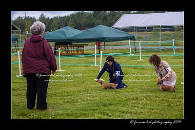 07/24/2014 -Alaska Hound Group Show - AHGA