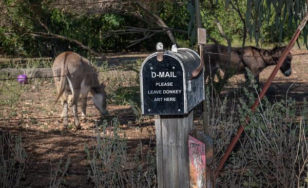 Bol Park Donkeys - June 2021