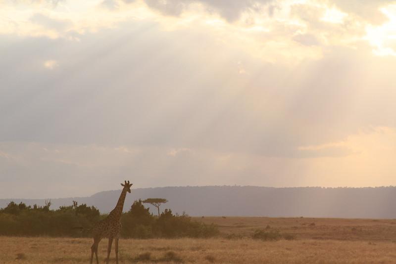 Kenya Part2 '15 138.JPG