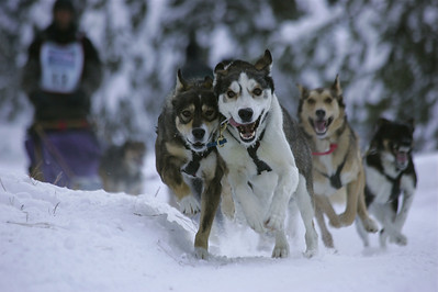 Okanogan Tourism:  Conconully Dogsled Race