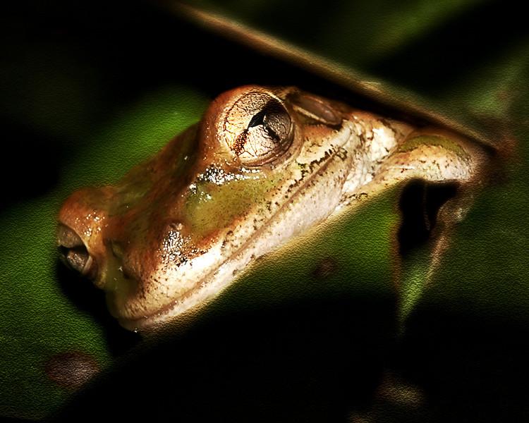 Frog-035-Enhanced.jpg