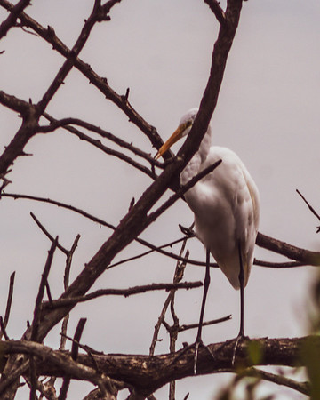 Jamaica Bay Wildlife Preserve