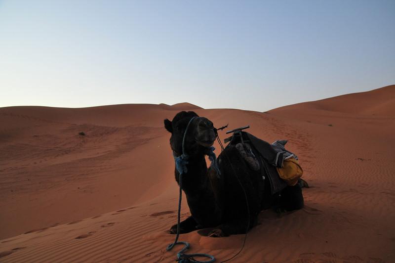 day4-SaharaCamp-23.jpg