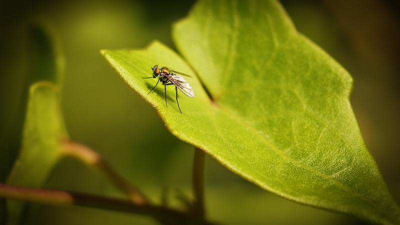Bugs and Beetles - 188.jpg