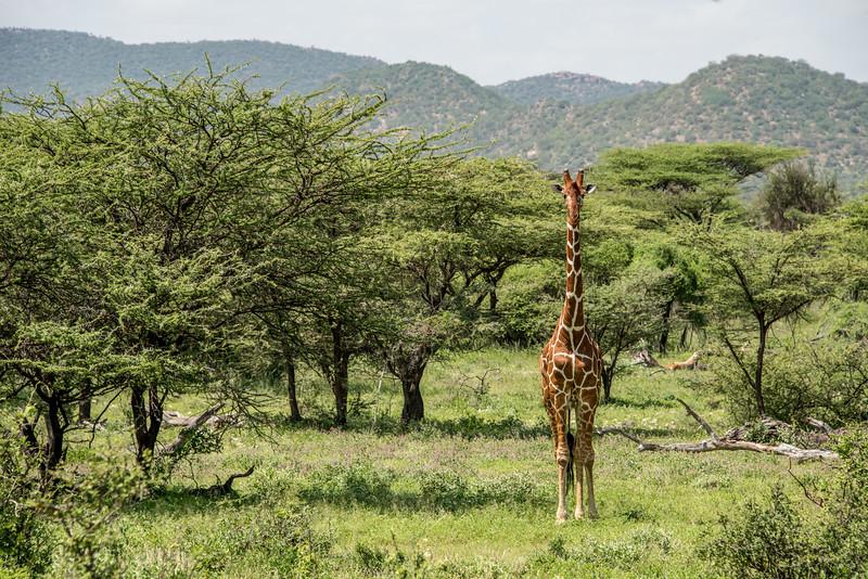 Samburu (44 of 70).jpg