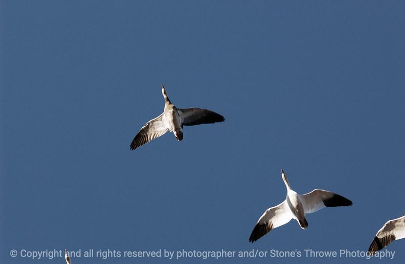 birds-bosque_del_apache_nm-01dec06-3096
