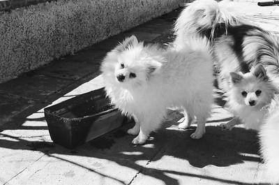 Film-Dogs