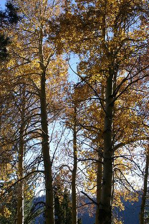 Fall in Sierras 06 - Highlights