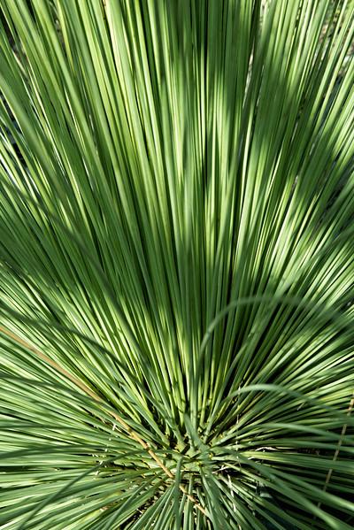 20160805 Albuquerque Botanical Garden 007-e1.jpg