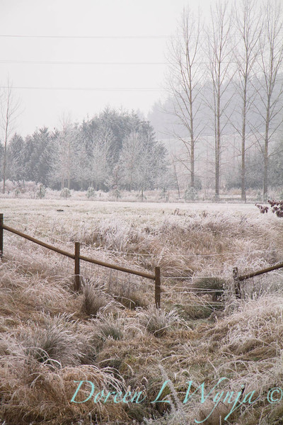Winter frost_9438.jpg