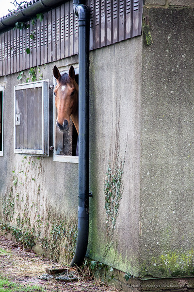 Woodget-140115-008--England, horse - livestock, village, Wiltshire.jpg
