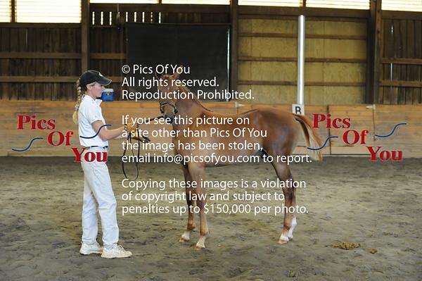 Foal entry 12