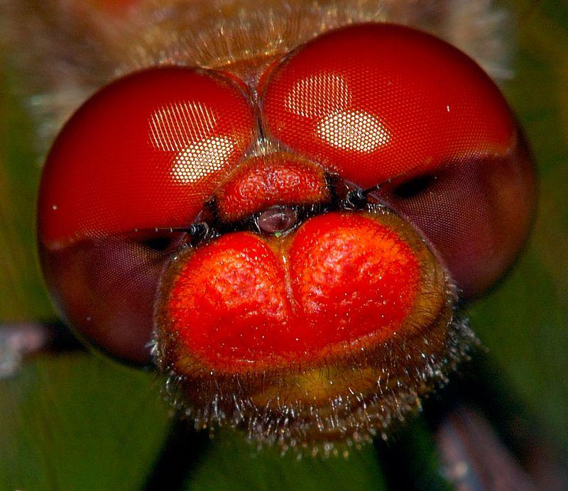 cherryfacecloseupcrop.jpg