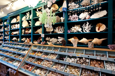 Scallops 65 Daniel St Portsmouth NH