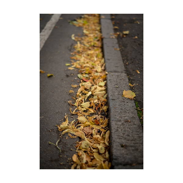 249_Leaves_10x10.jpg