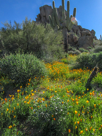 AZ Hiking March '17