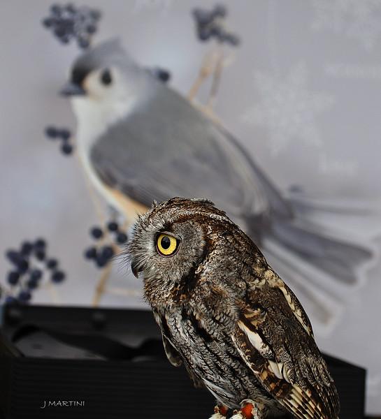 SMALL OWL 12-13-2014.psd
