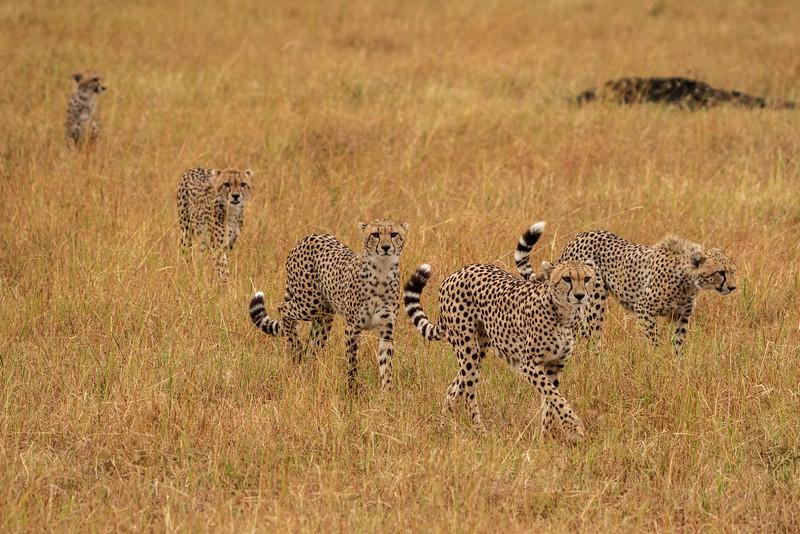 Kenya 2015-07655.jpg
