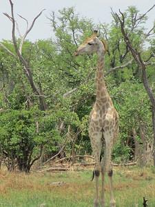 Botswana Inspection Trip