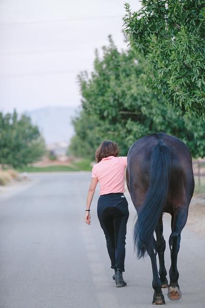 Horses-7.jpg