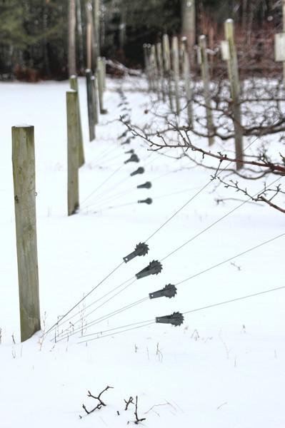 Easy Pickins Winter 016-1676784094-O.jpg