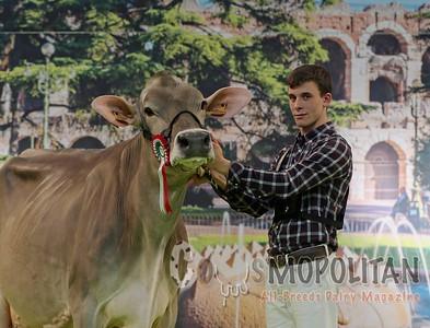 Brown Swiss Cows Verona 2016