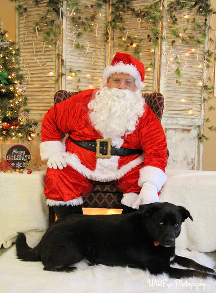 2016 Santa Paws - Bentley