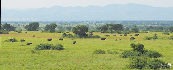 Elephant views