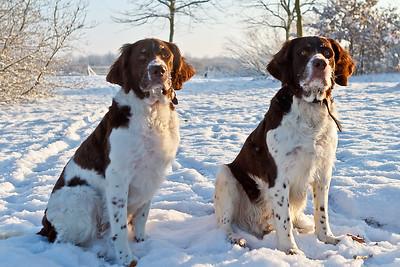 20120204 Max & Monty in de sneeuw