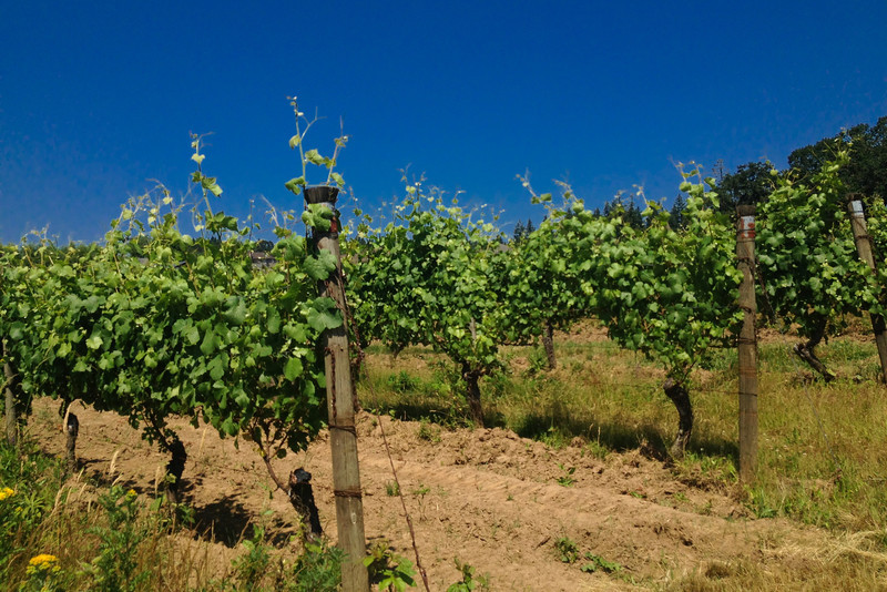 wine biodynamic vineyard.jpg