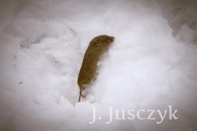 Jusczyk2020-2396.jpg