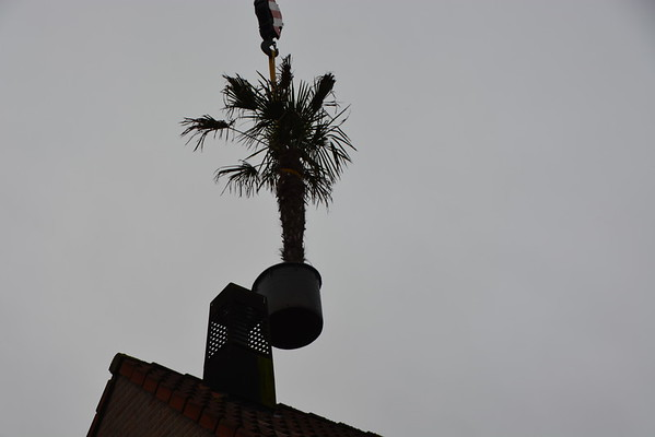 Palmenveld