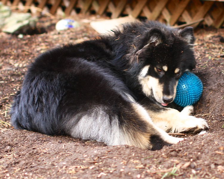 MY BALL AND I WORKED VERY HARD AND NOW IT'S TIME FOR OUR NAP March 21, 2013
