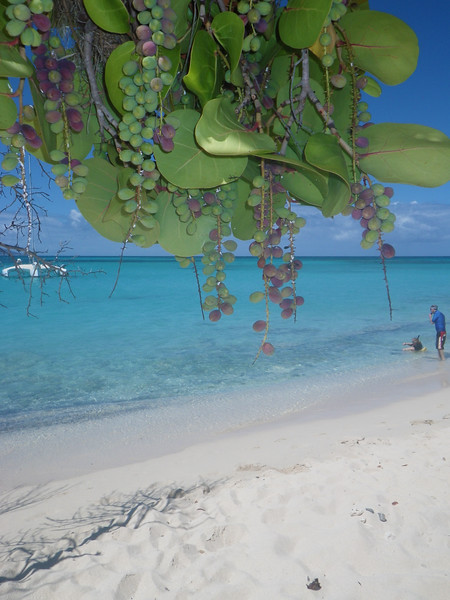 St. Croix (48).JPG