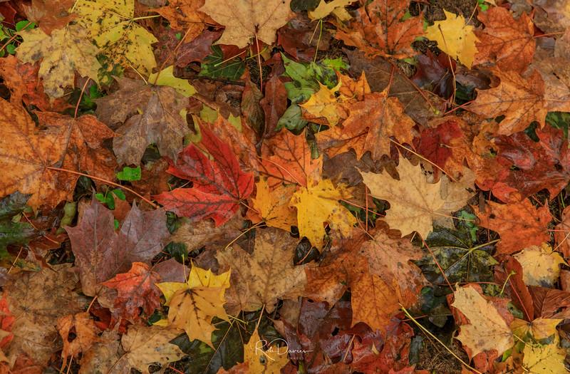 The fallen leaves...