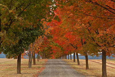 Fall Images in Greenbluff