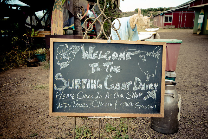 surfing goat welcome.jpg