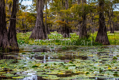 Caddo Lake Art Pictures In Color Gp4