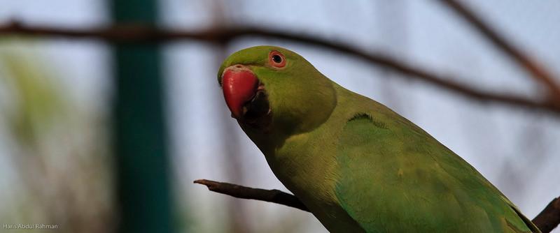 100120 KL Bird Park