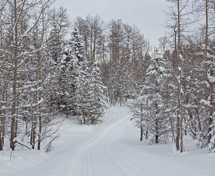 Iron Creek ski trail, November 28