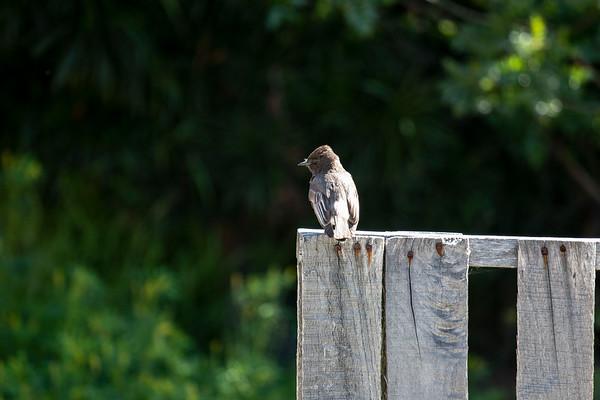 Yard Birds - 10th St. Del Mar