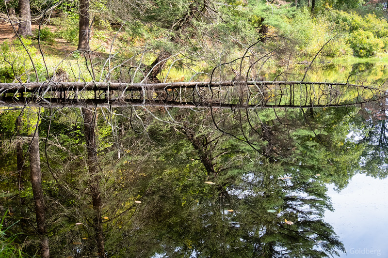 a fallen tree, mirrored