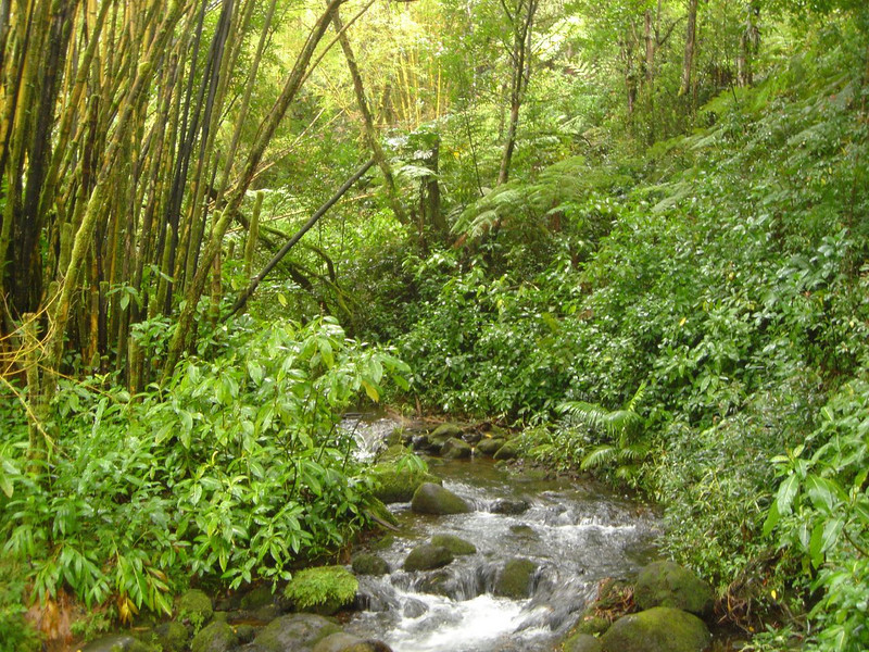 Stream in the rainforest of Hawaii