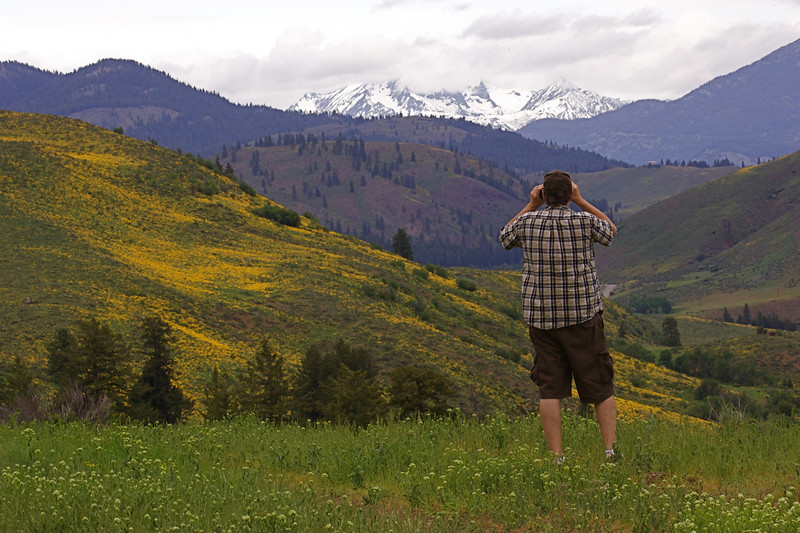 This photographer is capturing the scene as sunflowers blanket much of the Methow Valley in May