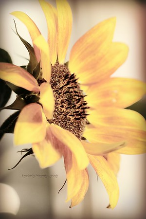 Nebraska Flowers