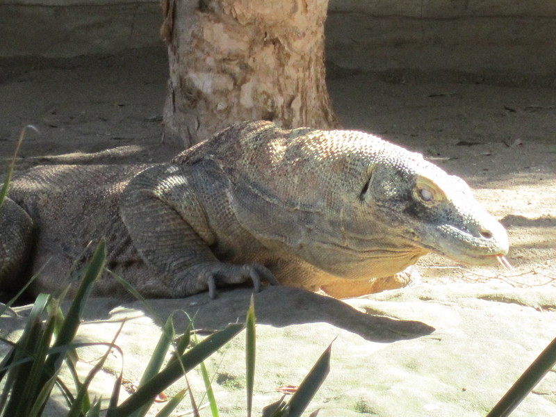 Sydney - Sydeny Zoo-12.JPG